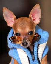 выкройки для собак